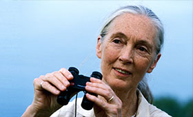 Jane Goodall looks into the distance holding a pair of binoculars.